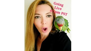 Parrot Playhouse Tuesday Live Stream
