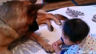 赤ちゃんと向かい合ってペロペロ攻撃の犬に対し、雄叫びをあげて応戦す...