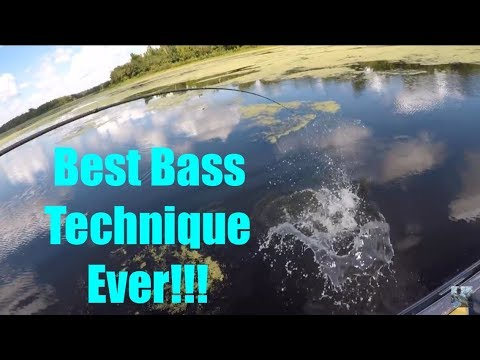 Lake Fork Bass Fishing With Plastic Worms: Tips and Techniques