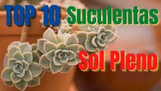 10 Gêneros De Suculentas Que Adoram O Sol Pleno