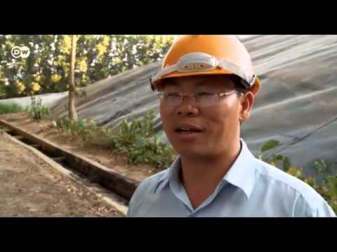 Vietnam: electricidad a partir de yuca   Global 3000