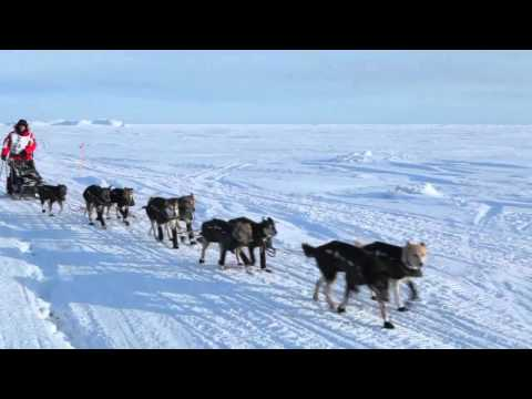 Dallas Seavey, 2012 Iditarod Trail Sled Dog Race Champion, arrives in Nome