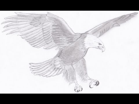 Drawing a bald eagle youtube