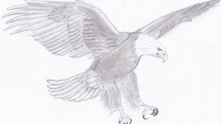 Drawing a Bald Eagle