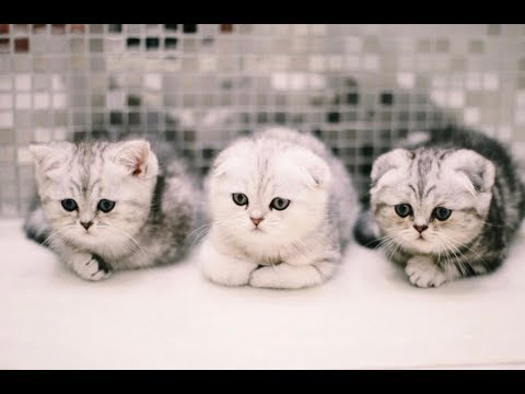 Cute Kittens Doing Funny Things Compilation 2018