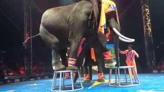 "UniverSoul Circus / ATL - Soul Circus Divas & Elephants ""Limbo"""