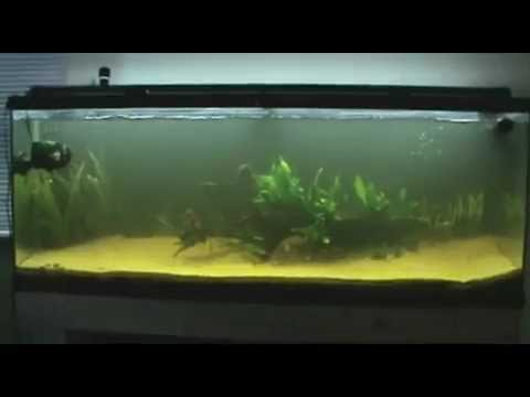 55-gallon-update,-up-and-running