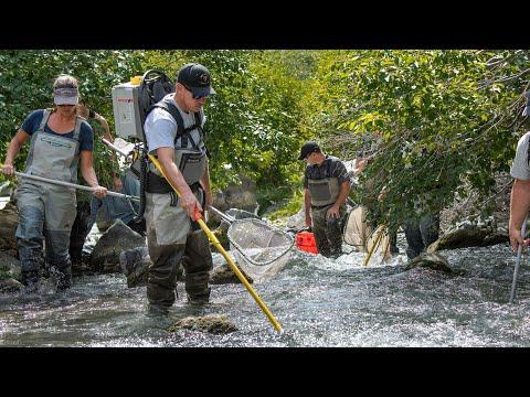 Red River Trout Survey