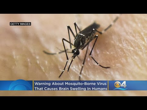 Mosquito-Borne Virus That Causes Brain Swelling In Humans Detected In Florida