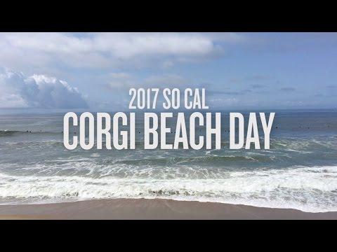 Winston at Spring 2017 So Cal Corgi Beach Day