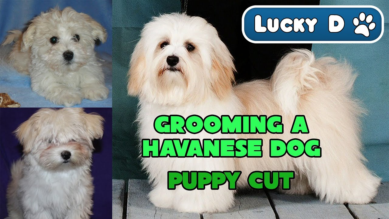 Haircuts For Dogs Gallery Haircuts 2018 Men Fade