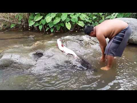 Primitive Technology - earn a big fish- Take to cook eating delicious