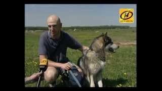 Cоревнования любителей собак ездовых пород прошли под Минском