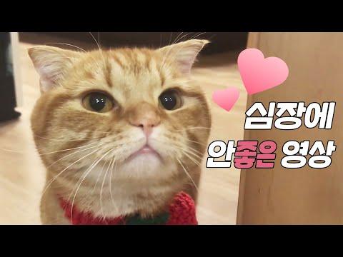 고양이 목도리를 떠줬어요~ 뜨개질과 고양이 [베니패밀리] Knitting & Cat Benny