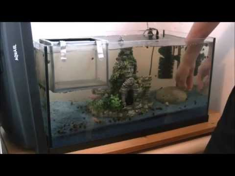 Aquarium - Dekoration verstellen - YouTube