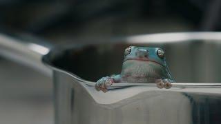 Boiling Frog Syndrome - Rachel Yurkovich