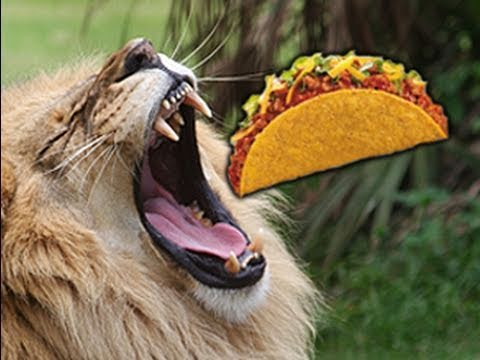 Lion Meat Tacos - FOR SALE !!