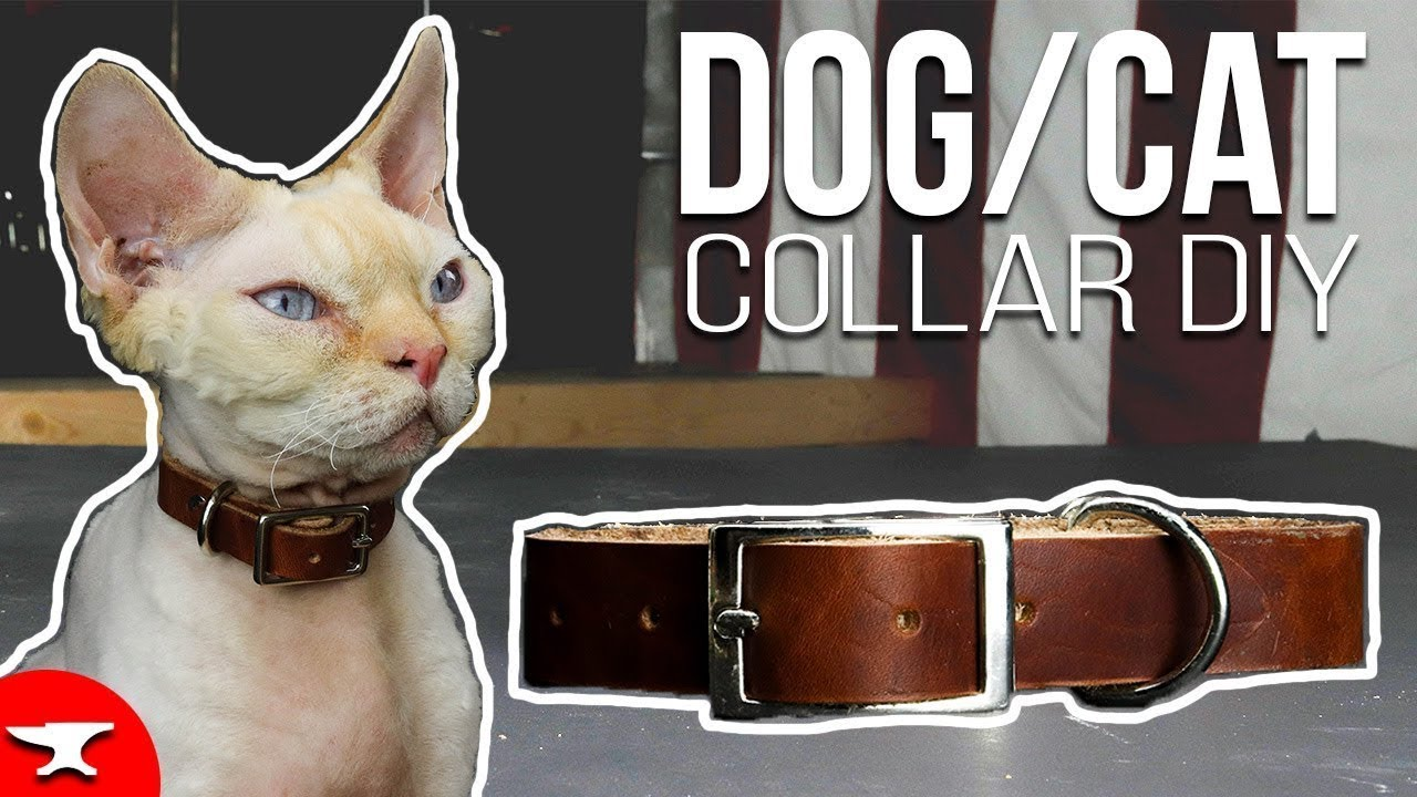 Diy Dog Or Cat Collar Leather Pet Collar How To