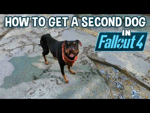 How To Get A Second Dog In Fallout 4 | Your New Junkyard Dog