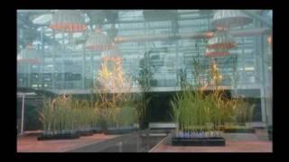 GMO - Monopol na Ziarna i Herbicydy