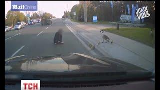 У Канаді гуска напала на жінку