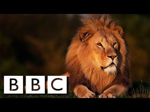 POWER ! Lions