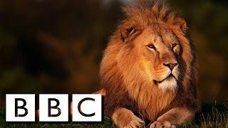 POWER ! Lions Documentary 2016 HD [Full Documentary 2016]