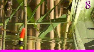 8-Поклевка КАРАСЯ на поплавочную удочку. Fish Crucian. Ловля карася. Насадка- опарыш. поплавок