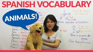 Learn Animal Vocabulary in Spanish!