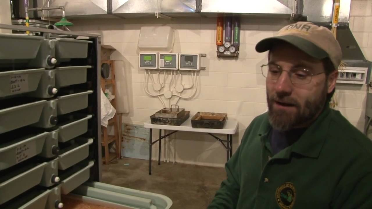 how to make a fish hatchery