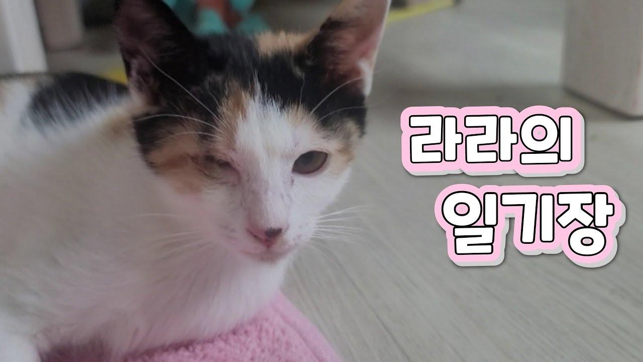 생후84일 어린고양이 라라의 일기장