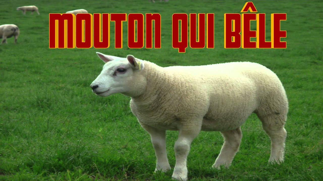 bruitage mouton