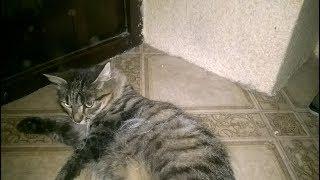 Кошка просит кота вы еще такого не видели
