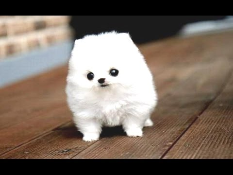 Funny Puppies And Cute Puppy Videos Compilation 2016 [BEST OF]