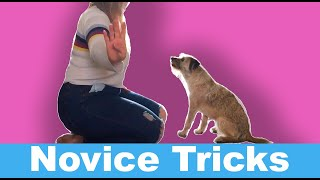 Novice Dog Tricks with a Border Terrier