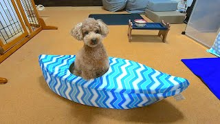 The dog who loved the canoe-shaped cool bed so much