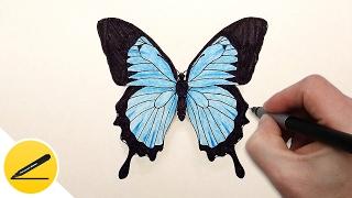Как Нарисовать Бабочку поэтапно ✿ Учимся рисовать бабочку