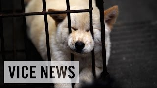 VICE News Daily: Beyond The Headlines - December 19, 2014