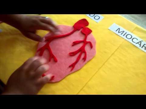 Maquete do cora o veias art rias aprenda a fazer para for Como criar peces para consumo humano