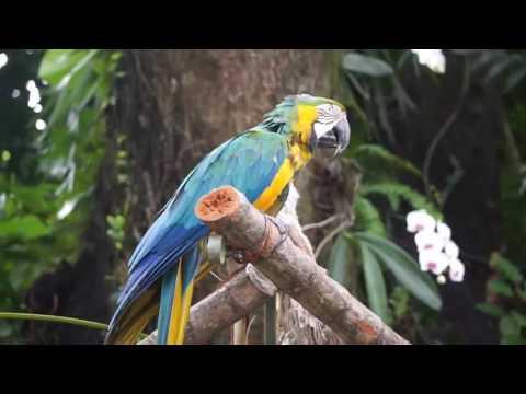 Keraban - Guadeloupe   Antigua   Barbuda Animal life