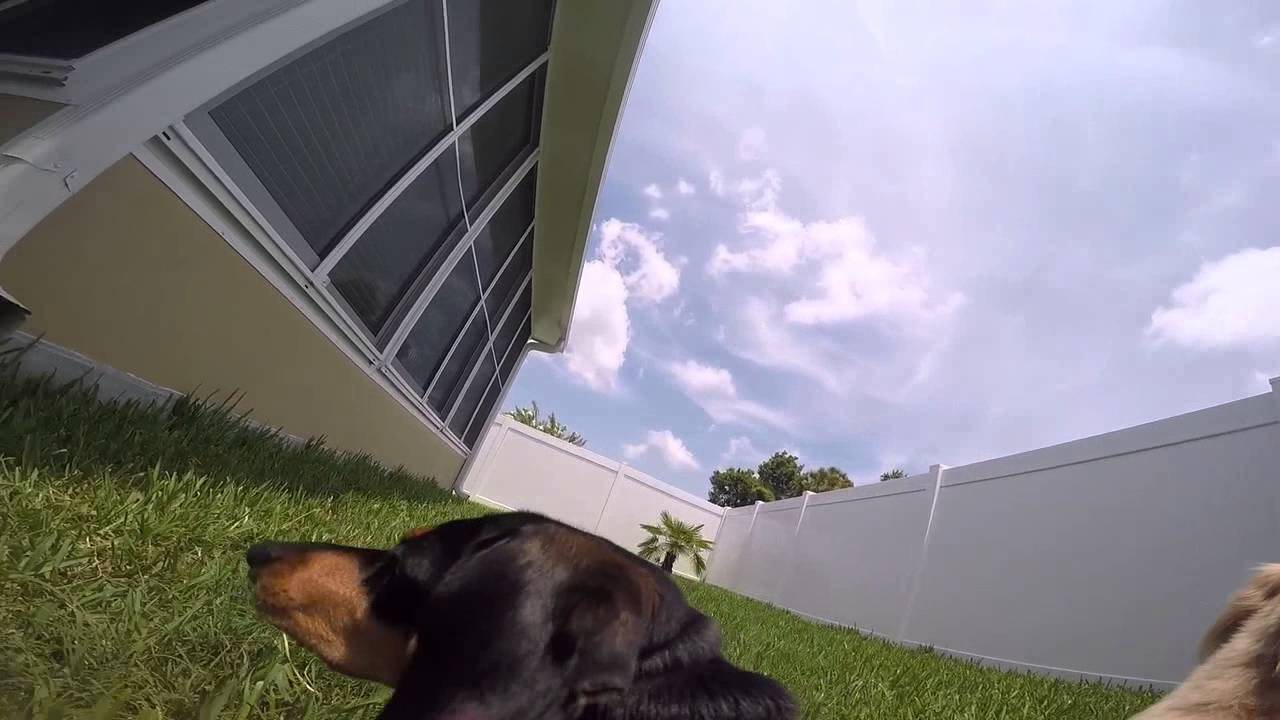 Doxie cam