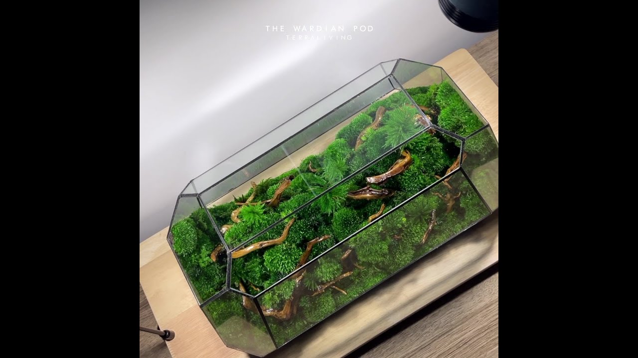The Wardian Pod, a Preserved Moss Geometric Terrarium, Botanical Collection by TerraLiving