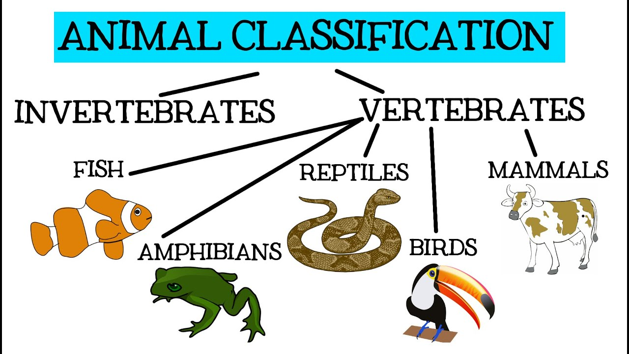 Animal Classification for Children: Classifying Vertebrates and  Invertebrates for Kids - FreeSchool - YouTube [ 720 x 1280 Pixel ]