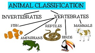 Animal Classification For Children: Classifying Vertebrates And Invertebrates For Kids - Freeschool