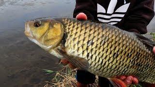 Dieser Fisch entscheidet alles - 180€ Rute für den Gewinner!