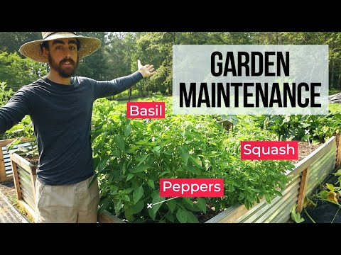 I Planted My Garden, Now What? In-Depth Gardening Lesson