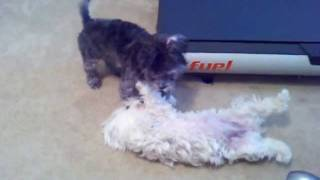 Mitsy and Shia playing