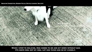 Behavior Correction For Border Collie, Bicycle Chasing
