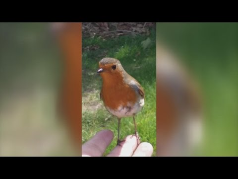Mom Brought To Tears When Wild Bird Comforts Her While Visiting Son's Grave from YouTube · Duration:  56 seconds