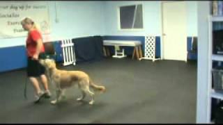 Calming Ovals Dog Training